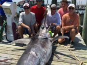 Fish Ocracoke, Huge Fish!