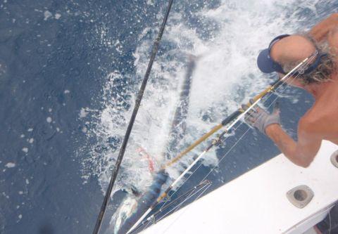 Gecko Sportfishing, Full Day Offshore Charter